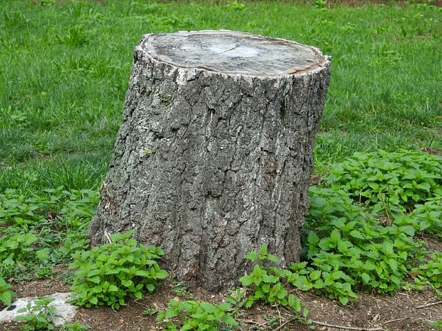 This is How You Can Easily Remove a Tree Stump 5
