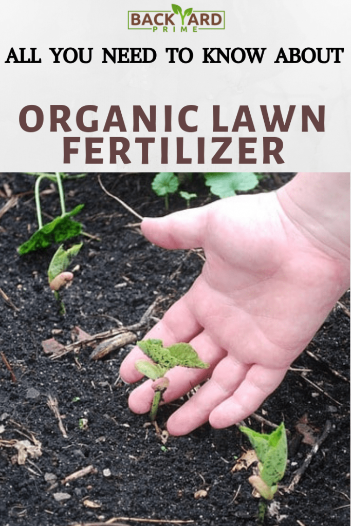 All You Need to Know about Organic Lawn Fertilizer 7