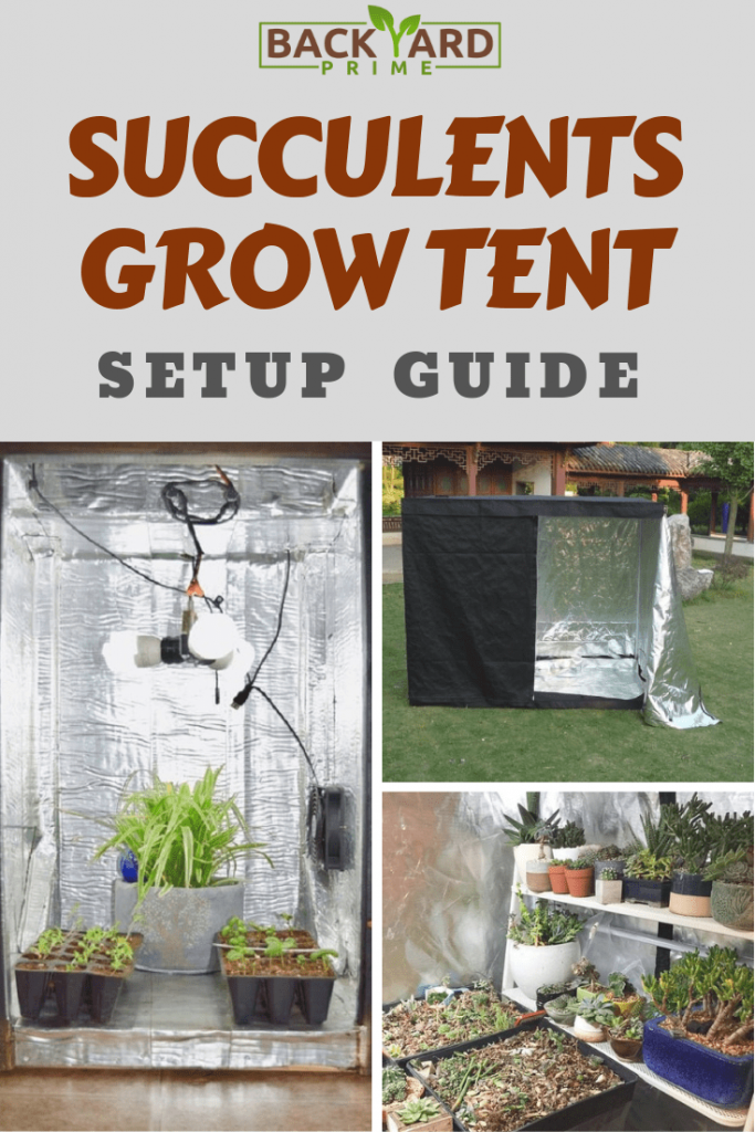 Succulents Grow Tent Setup Guide for Beginners 9