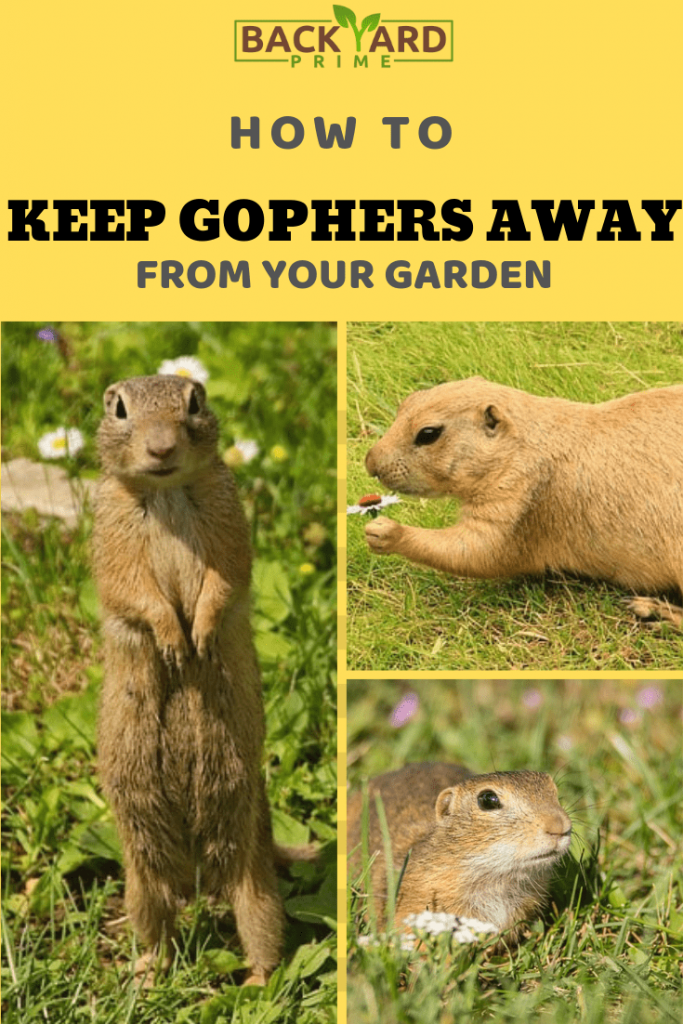 11 Tips to Keep Gophers Away from Your Garden 10