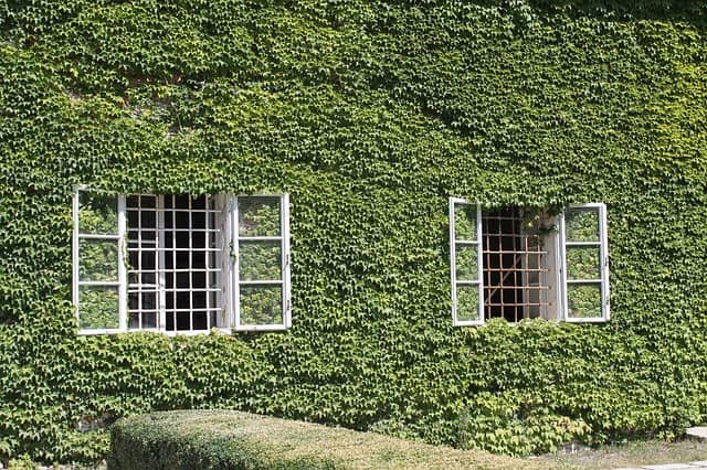 All That You Need to Know About the Living Walls Planters and Vertical Gardening? 3