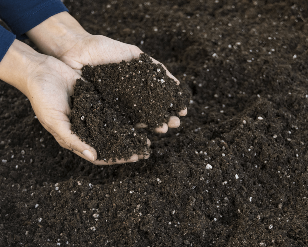 Potting Soil or a Potting Mix? How to Purchase the Right One? 1