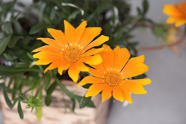 Your Complete Guide to Growing Annual Flowering Plants in Your Backyard 4