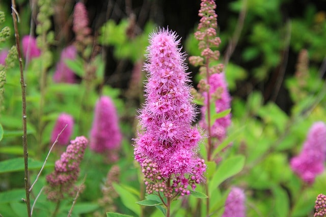 Why You Should NOT Plant These 5 Invasive Plants & Shrubs in your Backyard?