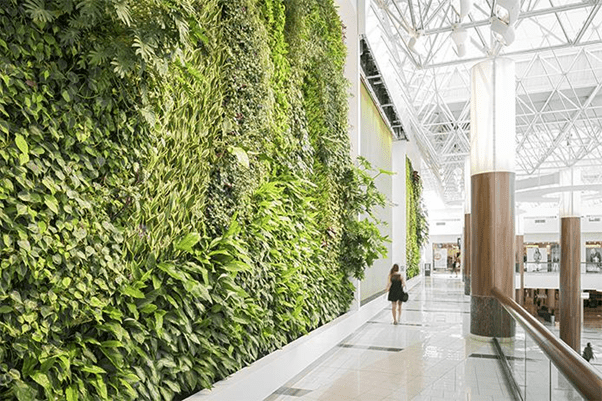 All That You Need to Know About the Living Walls Planters and Vertical Gardening? 1