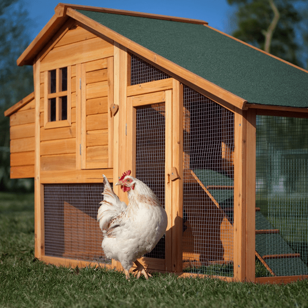The Ultimate Guide to Building a Chicken Coop and Make Money From it.