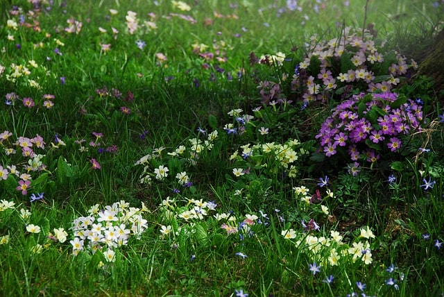 Top 5 Perennial Flowering Plants That Grow in Shade