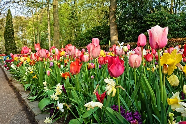Tips & Ideas to Edging a Flower Bed to Brighten Your Backyard 5