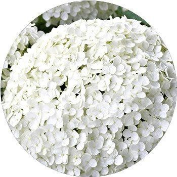 20 Most Breathtaking White Flowers in The World 15