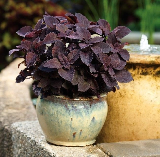 Top 20 Unique Stunning Black Flowers for your Backyard 14