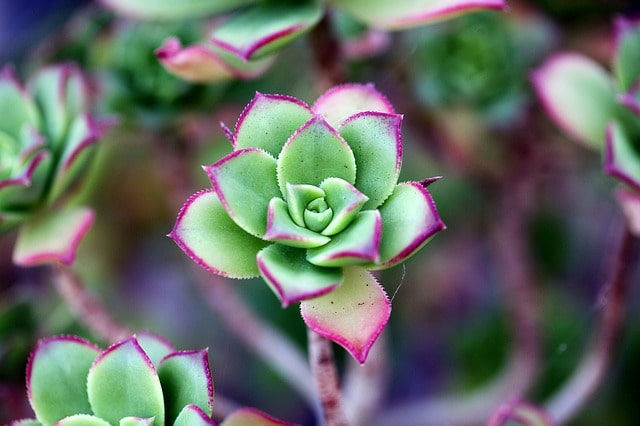How to Propagate Succulents in Three Easy Steps