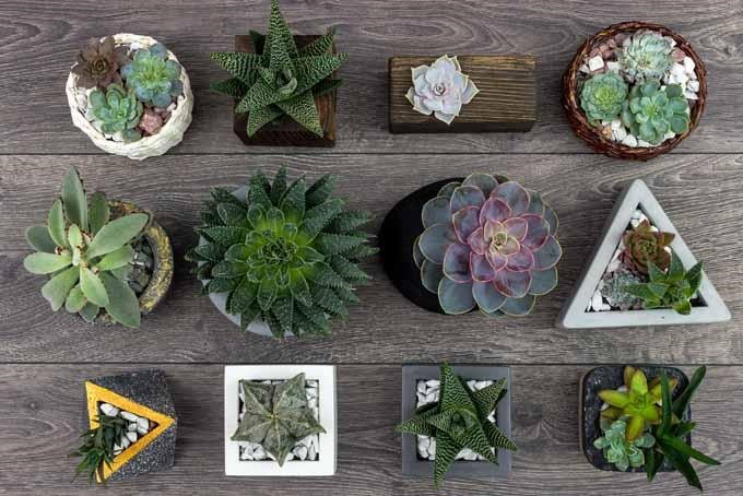 How to Propagate Succulents in Three Easy Steps 7