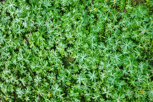 How to Choose the Best Ground Cover Plants Like an Expert