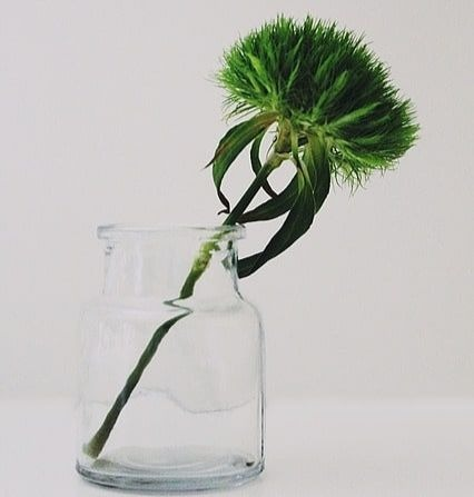 Breathtaking Naturally Green Flowers with Pictures