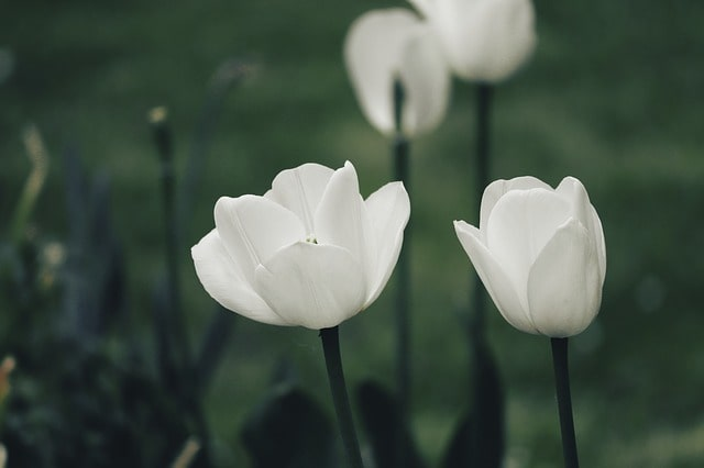 20 Most Breathtaking White Flowers in The World