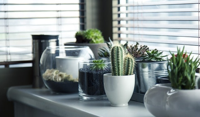 10 Reasons Why You Should NOT Make a Succulent Terrarium 6