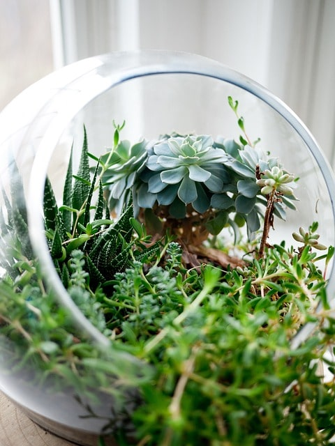 10 Reasons Why You Should NOT Make a Succulent Terrarium 5