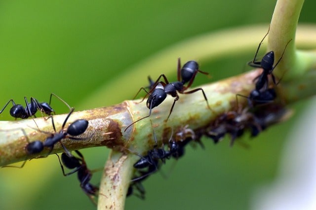 How to Get Rid of Ants in Your Yard? Natural Recipe! 1