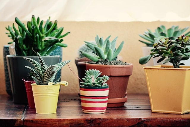 How to Decorate Terracotta Pots & Terra Cotta Planters? 4