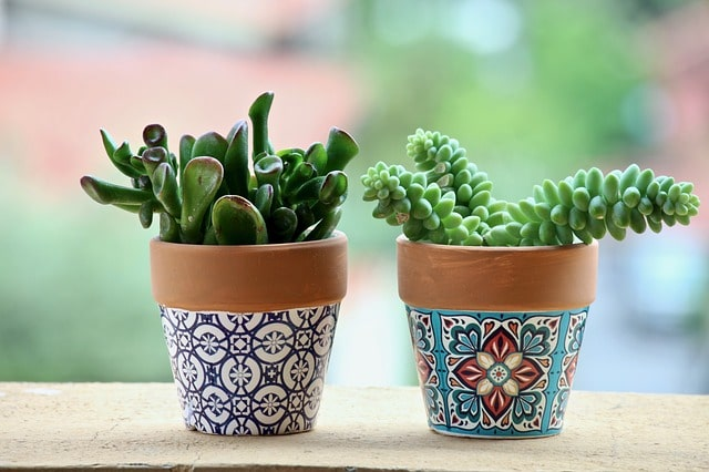 How to Decorate Terracotta Pots & Terra Cotta Planters? 2