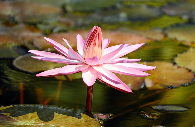 Easy Tips to Growing Water Plants for Your Pond 14