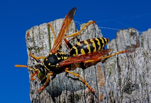 How To Get Rid Of Ground Hornets & Wasps? 1