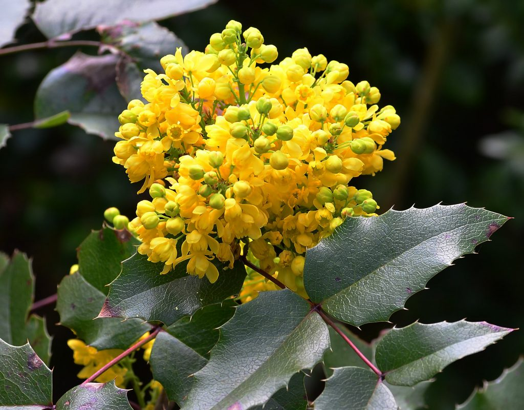 Top 9 Best Colorful Winter Plants for This Year 9
