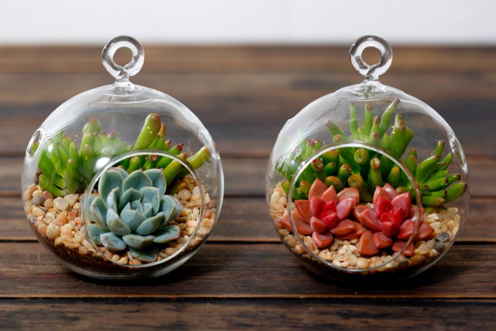 10 Reasons Why You Should NOT Make a Succulent Terrarium 3
