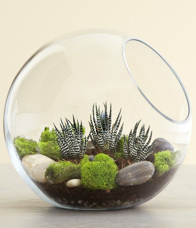 10 Reasons Why You Should NOT Make a Succulent Terrarium 2