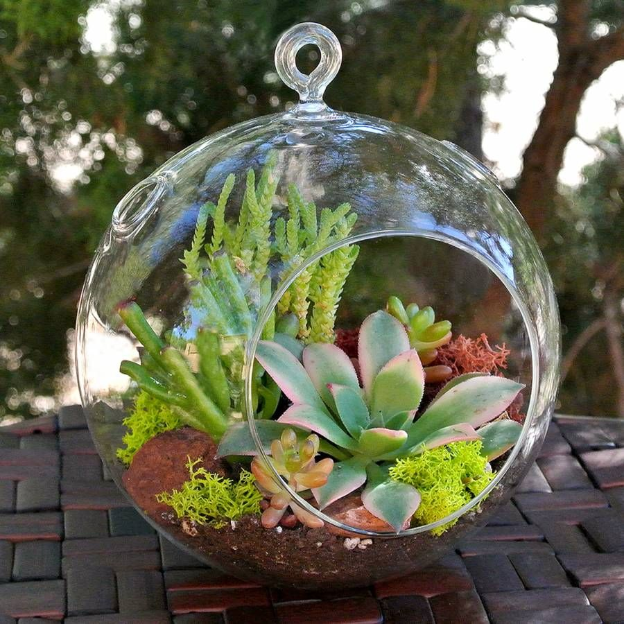 10 Reasons Why You Should NOT Make a Succulent Terrarium 4