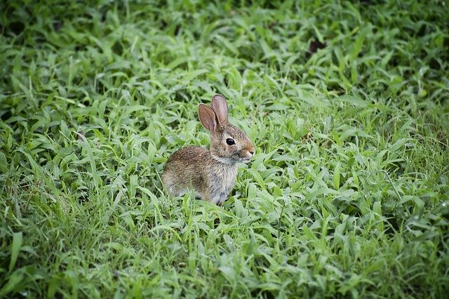 9 Easy Ways to Keep Rabbits Out of Your Garden