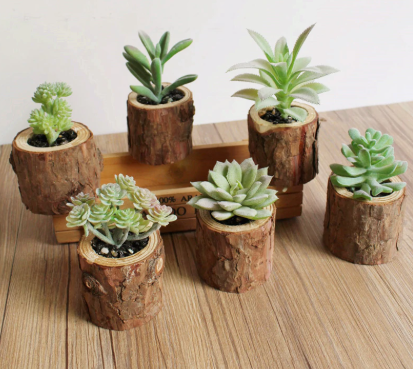 wood pots for cacti