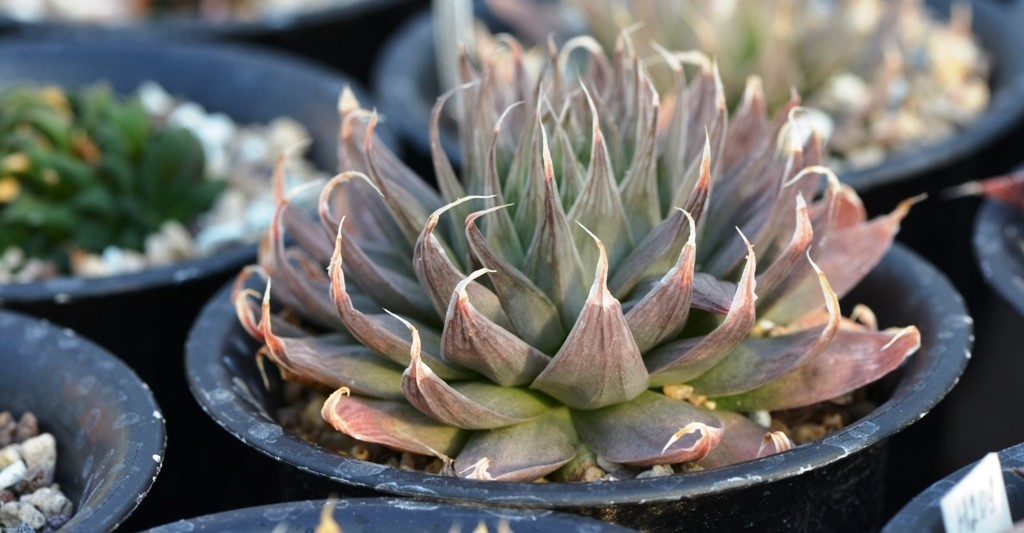 Why Are My Succulents Dying? (Tips To Save Them) 20