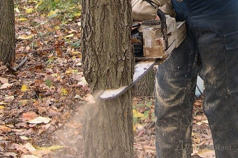 How to cut down a small tree easily