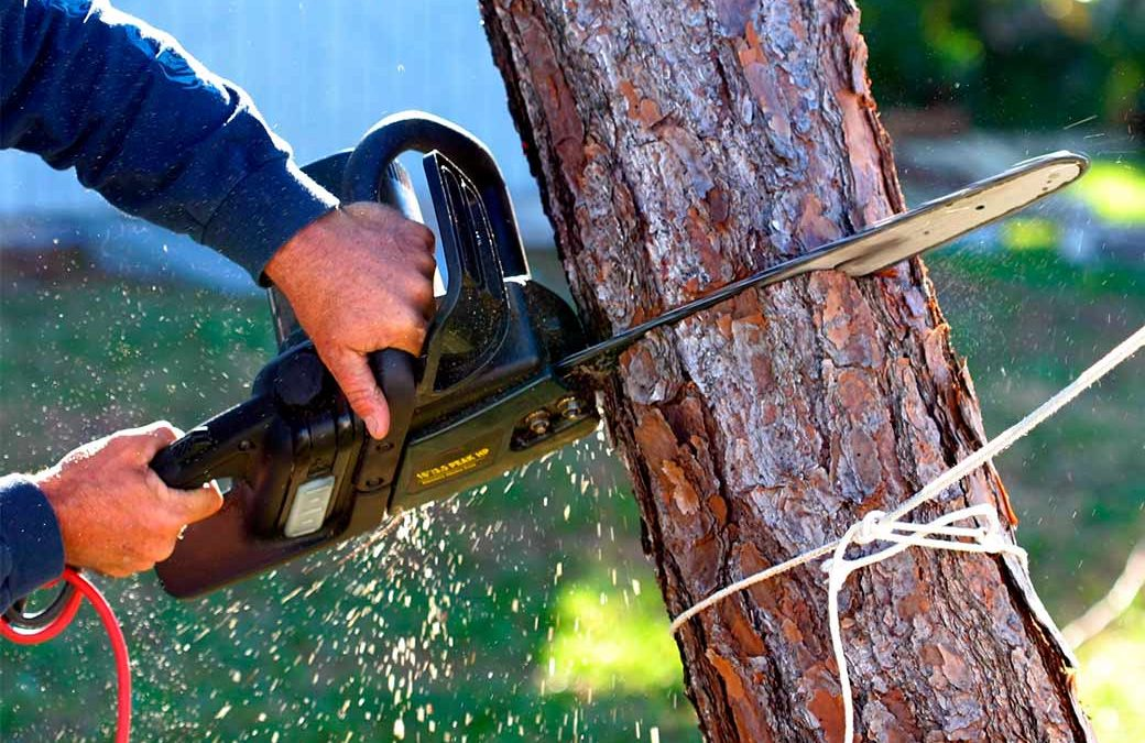 How to Cut Down a Small Tree Like an Expert?