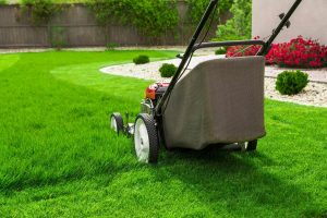 Lawn Care Tips: How & When To Mow New Grass? 1