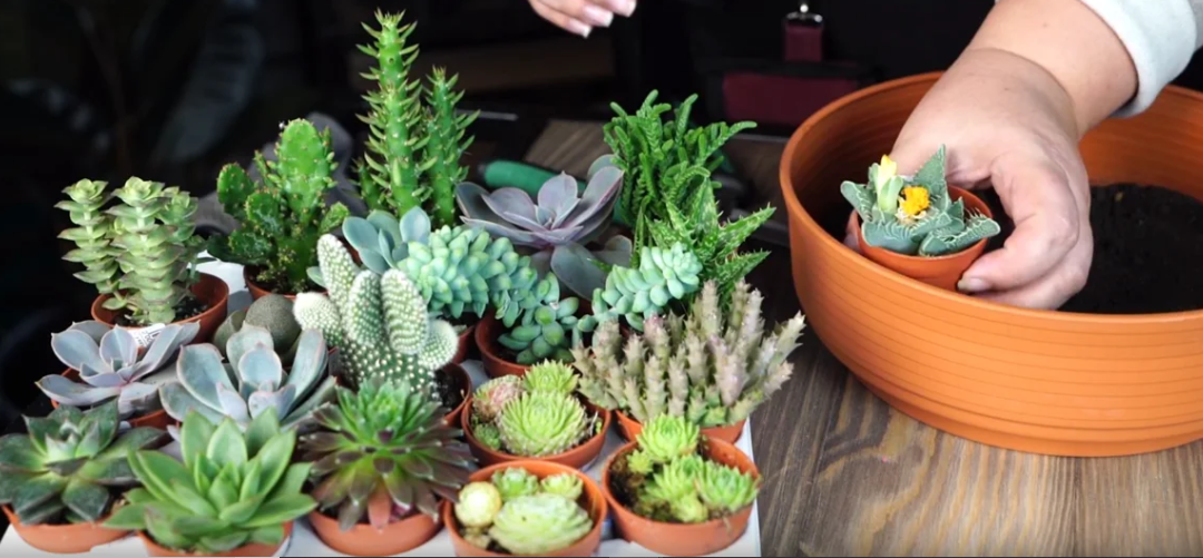 The Full Guide To Potting Succulents & Cacti