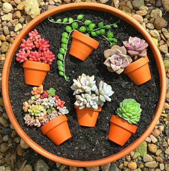 pots ideas for succulents
