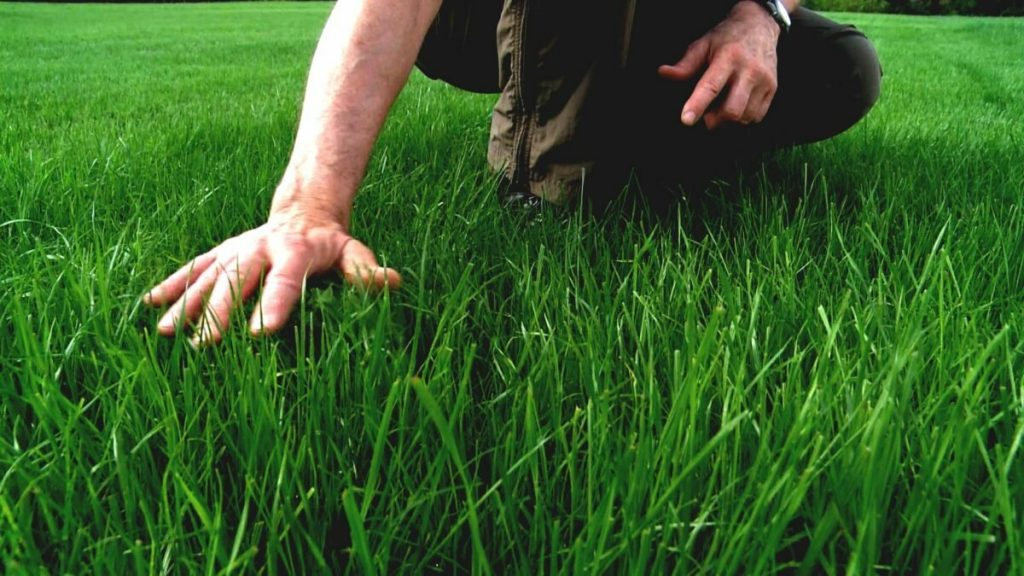 why i apply milorganite to my lawn
