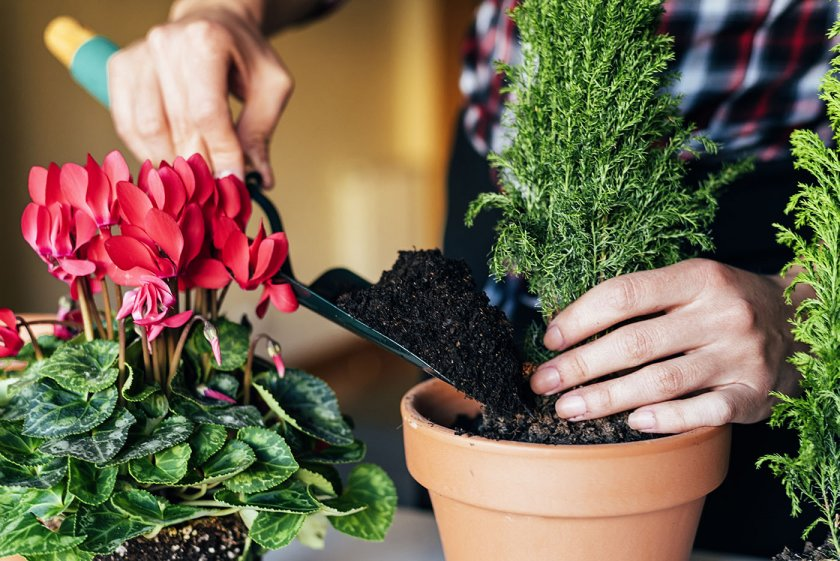 How to Transplant flowers