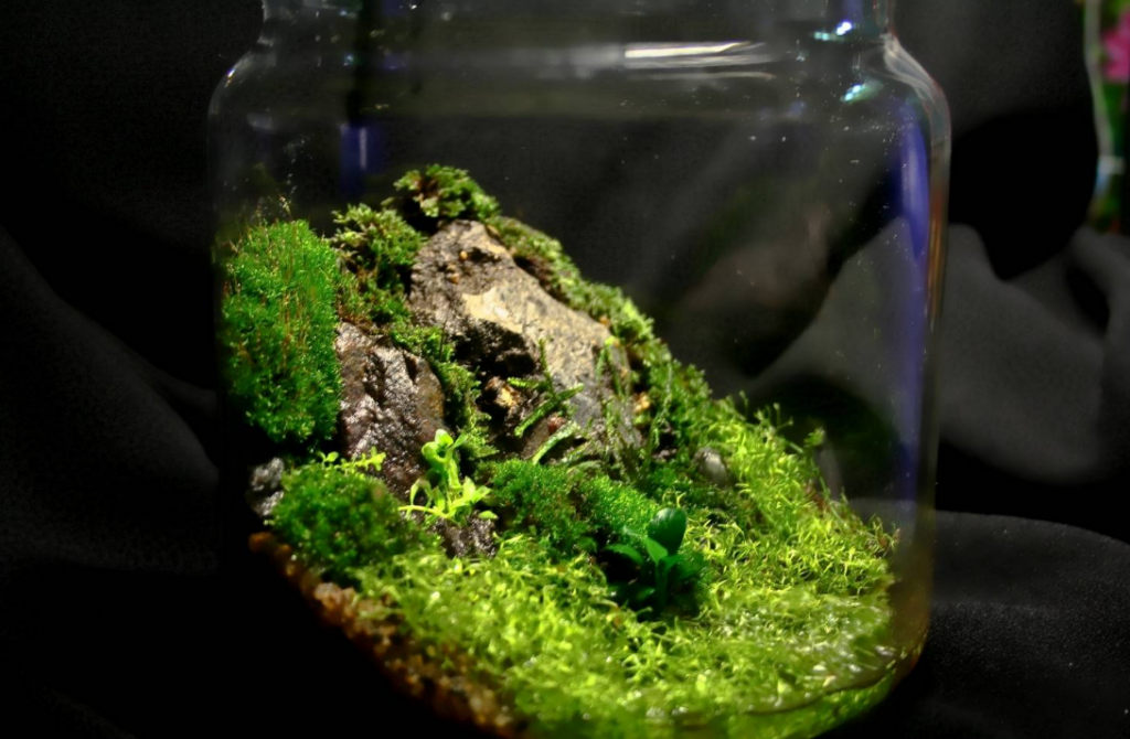 Moss growing Indoors