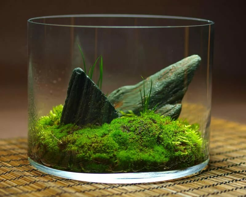 Growing Moss In terrarium