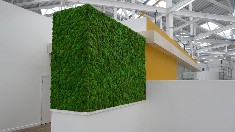 Growing Moss wall Indoors