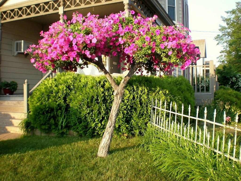 How to Fix a Leaning Tree easily