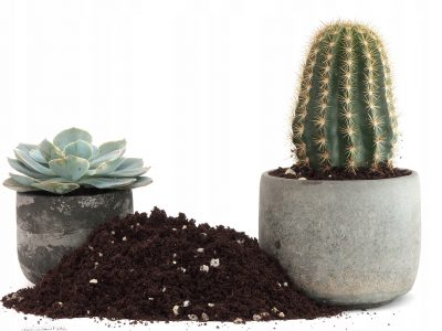 How To Make Cactus Soil Mix - Easy Recipe