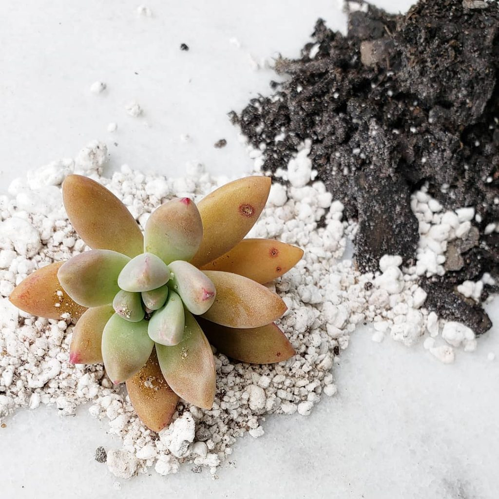 How To Make Your Own Succulent Soil Diy Backyard Prime