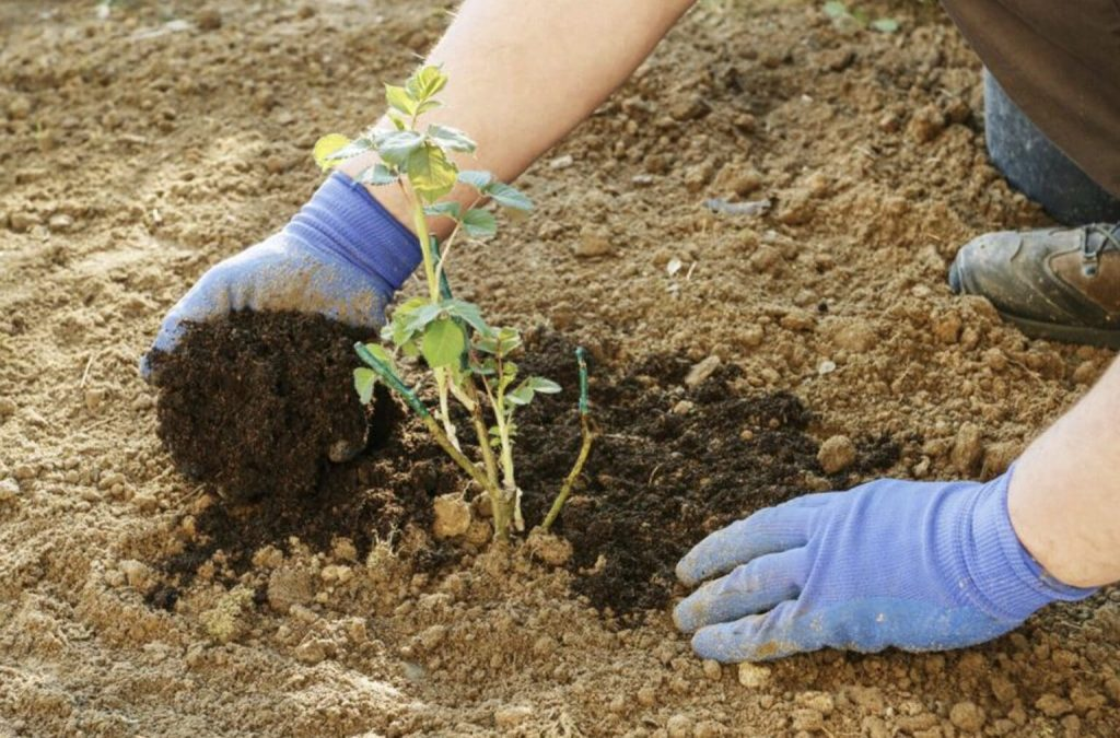 Autumn Planting Guide: What To Plant In September? 1
