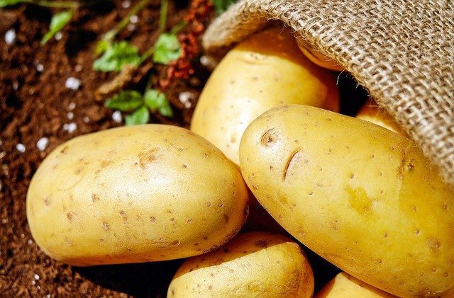 How Long Does It Take To Grow Potatoes From Planting To Harvest 1