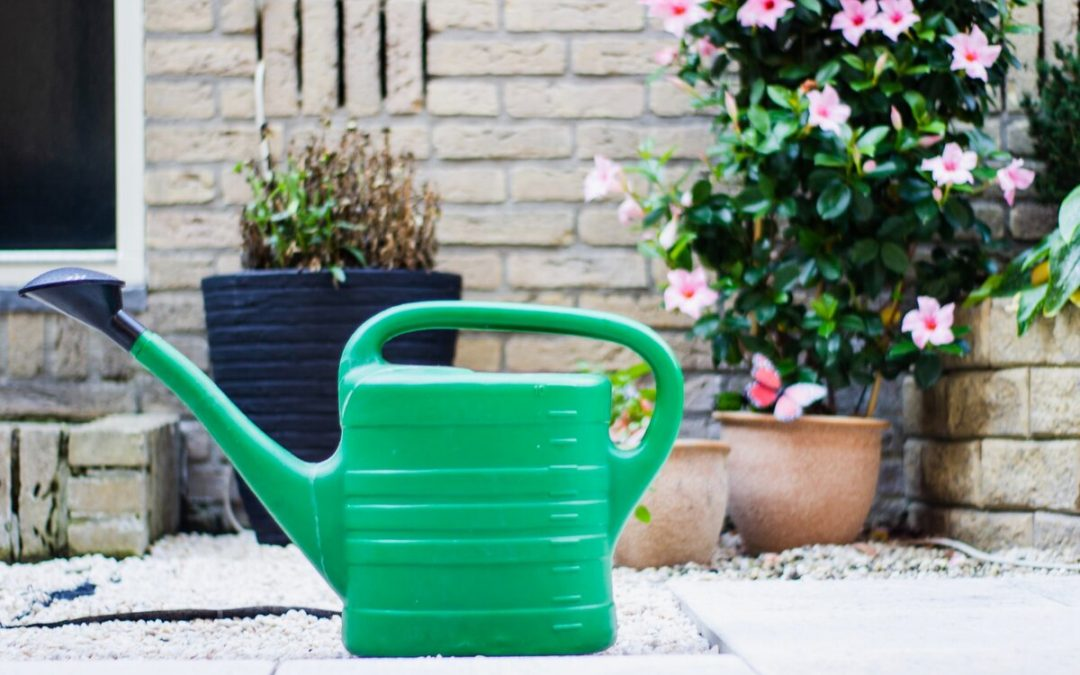How To Choose a Watering Can Like a Pro