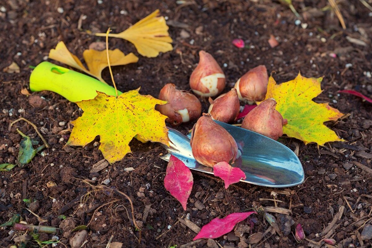 What to plant in September